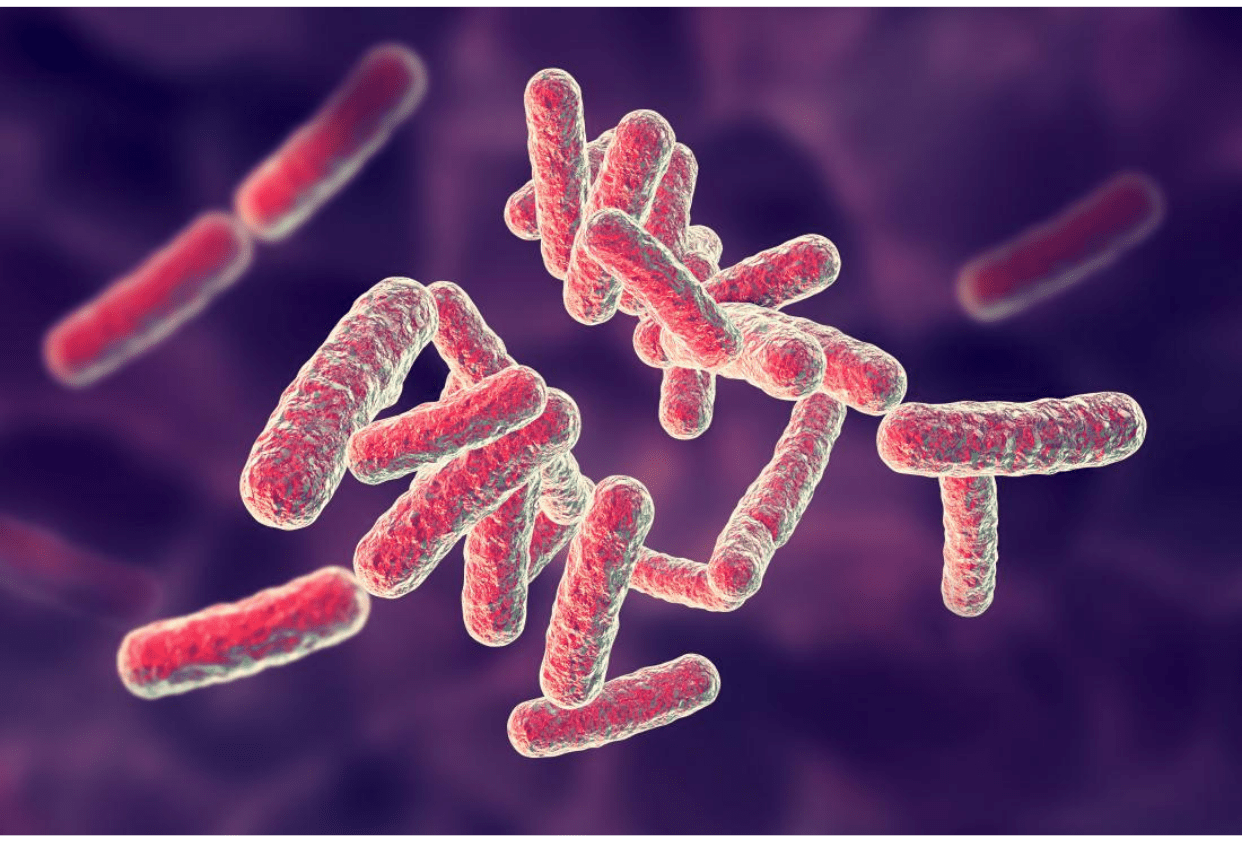 What are the factors influencing infection caused by pathogens?